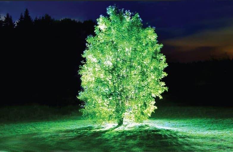 Starlight avatar: La prima pianta che si illumina al buio